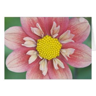 USA, Washington, Bellevue, Bellevue Botanical Card