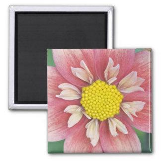 USA, Washington, Bellevue, Bellevue Botanical Refrigerator Magnets