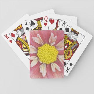 USA, Washington, Bellevue, Bellevue Botanical Playing Cards