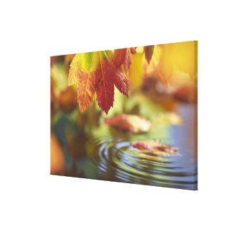 USA, Washington, Bellingham, Close-up of autumn Canvas Print