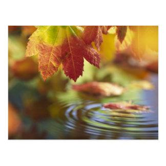 USA, Washington, Bellingham, Close-up of autumn Postcard
