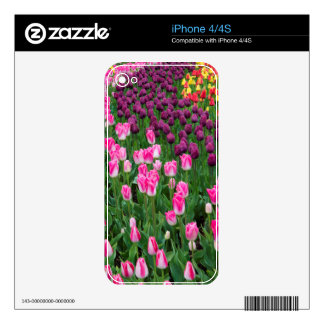 USA, Washington. Blooming Tulips Decals For The iPhone 4S