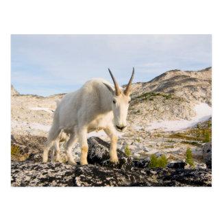 USA, Washington, Cascade Range 3 Postcard