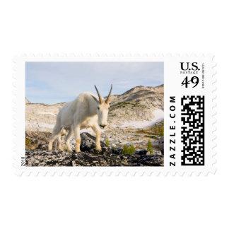 USA, Washington, Cascade Range 3 Stamp
