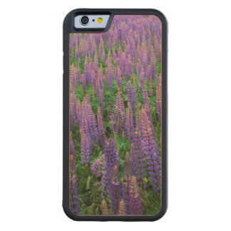 USA, Washington, Clallam County, Lupine Carved® Maple iPhone 6 Bumper Case
