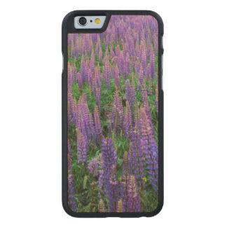 USA, Washington, Clallam County, Lupine Carved Maple iPhone 6 Case