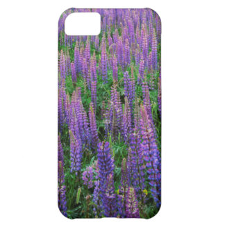 USA, Washington, Clallam County, Lupine Case For iPhone 5C