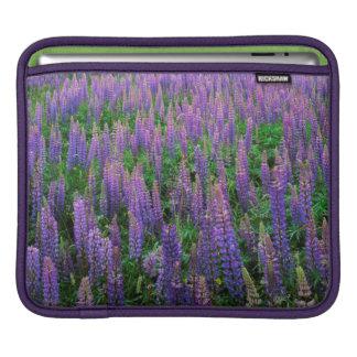 USA, Washington, Clallam County, Lupine iPad Sleeve