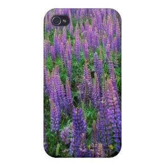 USA, Washington, Clallam County, Lupine iPhone 4 Case