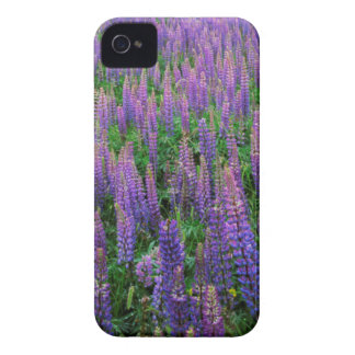 USA, Washington, Clallam County, Lupine iPhone 4 Cases