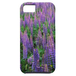 USA, Washington, Clallam County, Lupine iPhone SE/5/5s Case