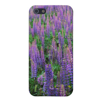 USA, Washington, Clallam County, Lupine iPhone SE/5/5s Cover