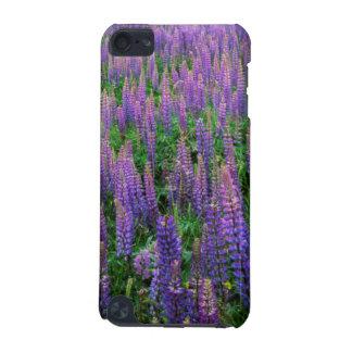 USA, Washington, Clallam County, Lupine iPod Touch 5G Cover