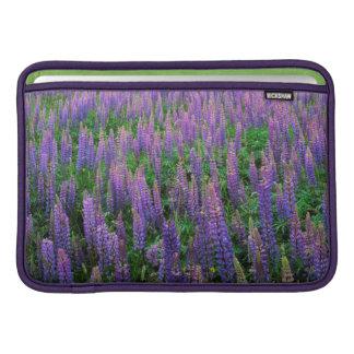 USA, Washington, Clallam County, Lupine MacBook Sleeve