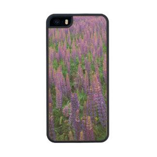 USA, Washington, Clallam County, Lupine Carved® Maple iPhone 5 Case