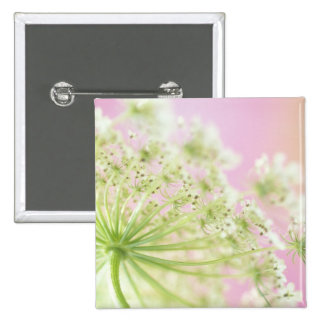 USA, Washington, Close-up of cow parsnip 2 Inch Square Button