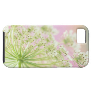 USA, Washington, Close-up of cow parsnip iPhone 5 Covers
