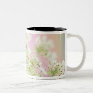 USA, Washington, Close-up of cow parsnip Two-Tone Coffee Mug