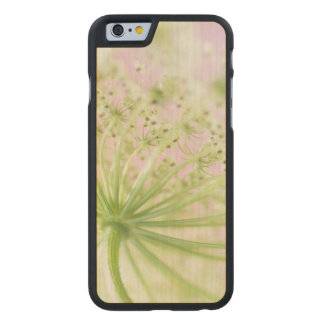 USA, Washington, Close-up of cow parsnip Carved® Maple iPhone 6 Slim Case
