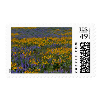 USA, Washington, Columbia River Gorge National Postage