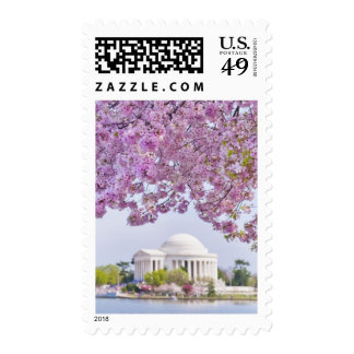 USA, Washington DC, Cherry tree in bloom Stamp