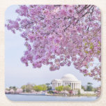 USA, Washington DC, Cherry tree in bloom Square Paper Coaster