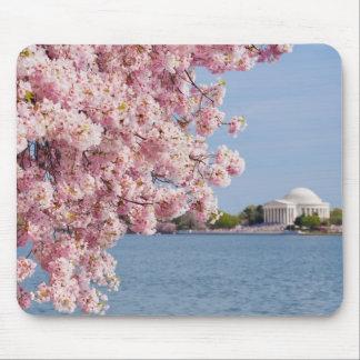 USA, Washington DC, Cherry tree Mouse Pad