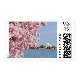 USA, Washington DC, Cherry tree Postage