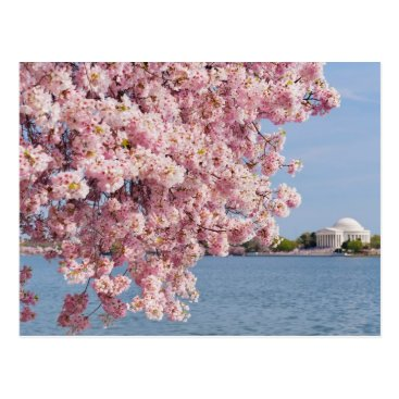 USA Themed USA, Washington DC, Cherry tree Postcard