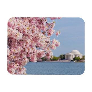 USA, Washington DC, Cherry tree Rectangular Photo Magnet