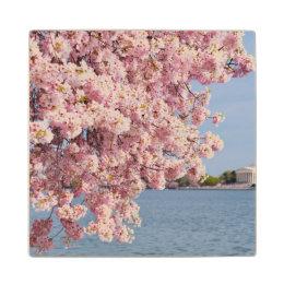 USA, Washington DC, Cherry tree Wood Coaster