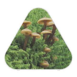 USA, Washington. Ferns and mushrooms Bluetooth Speaker