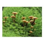 USA, Washington. Ferns and mushrooms Post Card