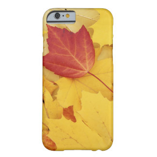 USA, Washington, Finch Arboretum, Red and Barely There iPhone 6 Case