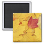 USA, Washington, Finch Arboretum, Red and 2 Inch Square Magnet