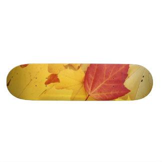 USA, Washington, Finch Arboretum, Red and Skateboard Deck