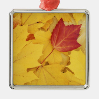 USA, Washington, Finch Arboretum, Red and Square Metal Christmas Ornament