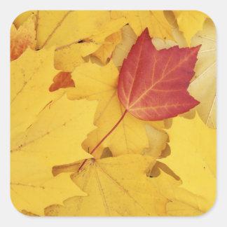 USA, Washington, Finch Arboretum, Red and Square Sticker