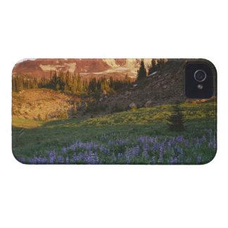 USA, Washington, Gifford Pinchot National iPhone 4 Case-Mate Cases