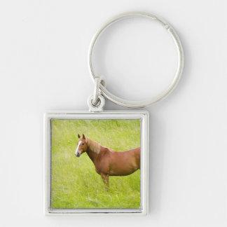 USA, Washington, Horse in Spring Field, 2 Keychain