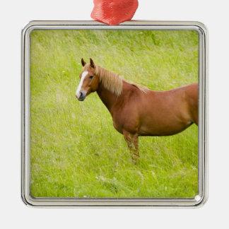 USA, Washington, Horse in Spring Field, 2 Metal Ornament