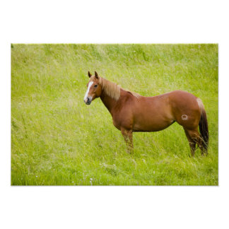 USA, Washington, Horse in Spring Field, 2 Poster