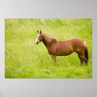 USA, Washington, Horse in Spring Field, 2 Print