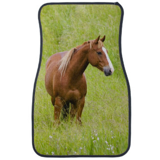 USA, Washington, Horse in Spring Field, Car Floor Mat