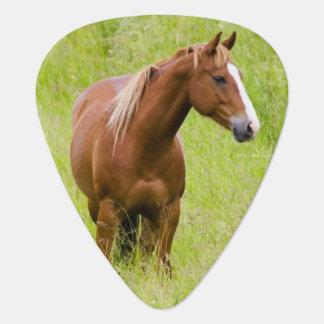 USA, Washington, Horse in Spring Field, Guitar Pick