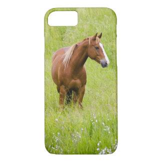 USA, Washington, Horse in Spring Field, iPhone 7 Case