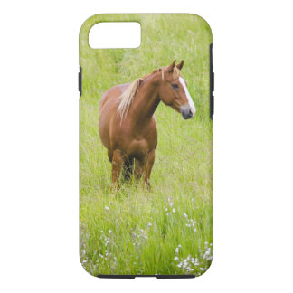 USA, Washington, Horse in Spring Field, iPhone 8/7 Case