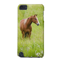 USA, Washington, Horse in Spring Field, iPod Touch 5G Case