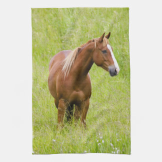 USA, Washington, Horse in Spring Field, Hand Towels