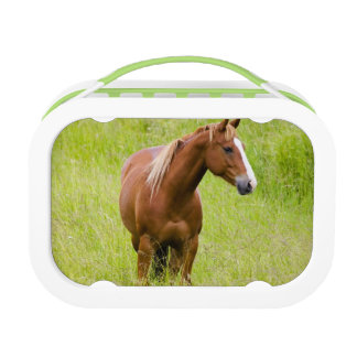 USA, Washington, Horse in Spring Field, Yubo Lunchboxes